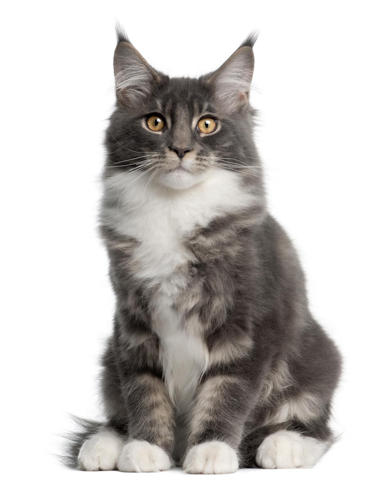 Serré chatte concours