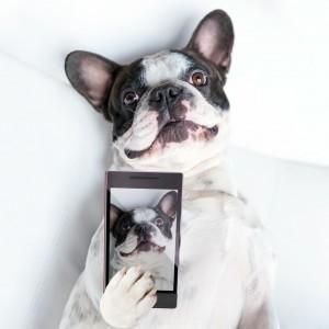 Participez au concours photo animaux Verlina