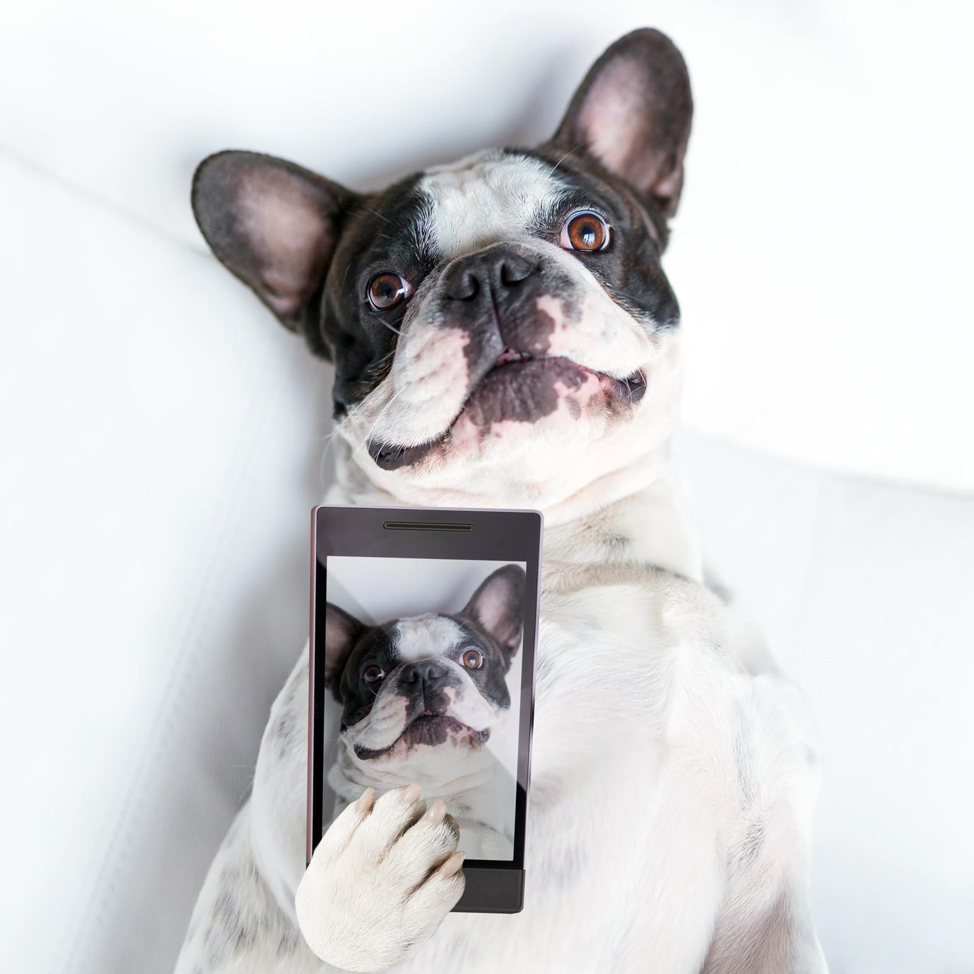 Pet Club Publix Super Markets Publix paws photo contest