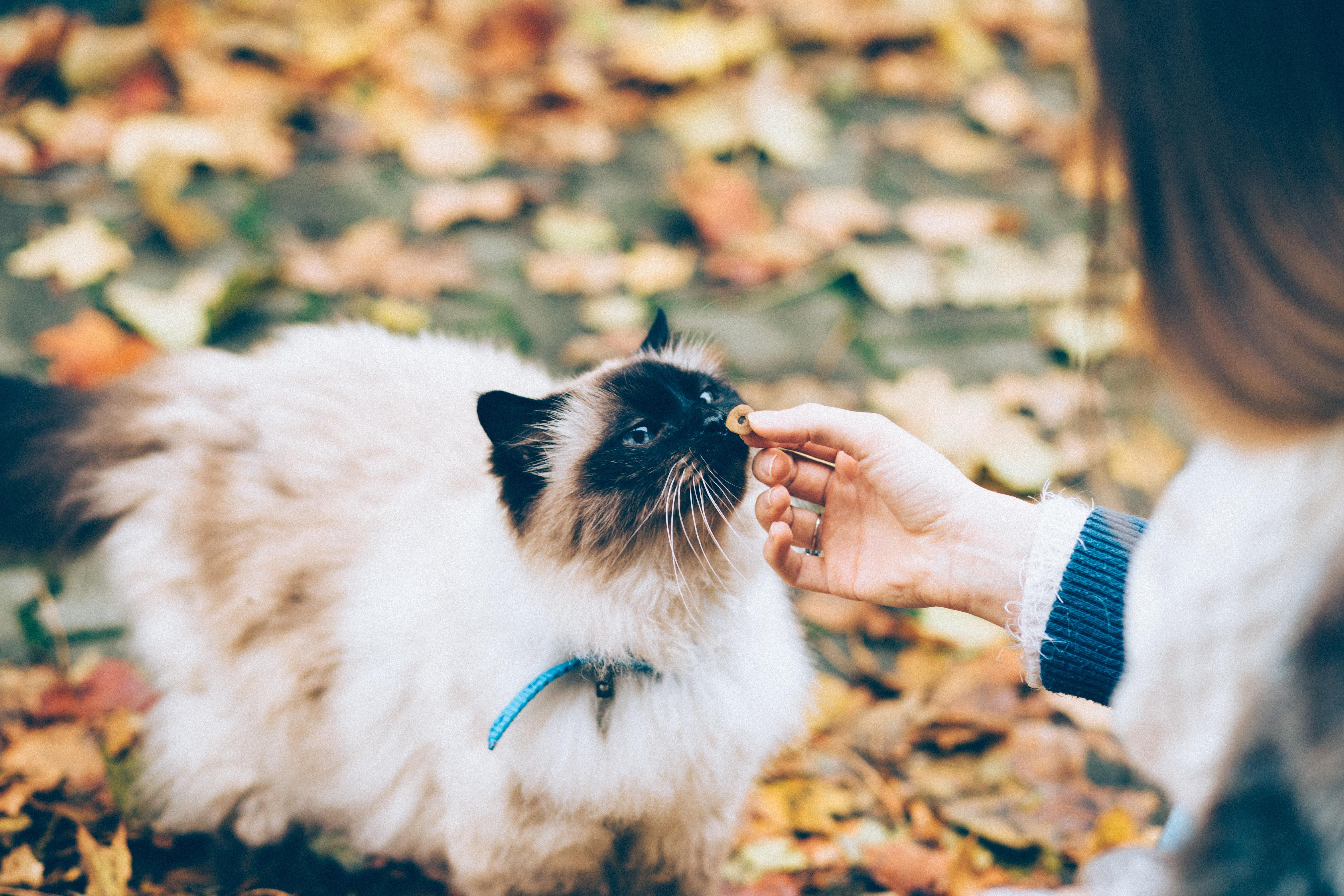 fille donne croquette à un chat