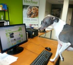 amener son animal au travail