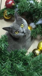 Kyttie chat concours photo novembre 2015