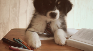 L'artiste chien concours photos
