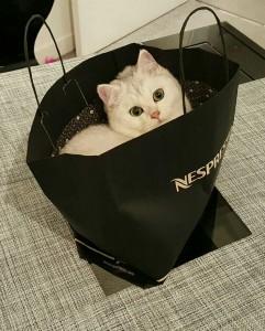 Leopold chat concours photo novembre 2015