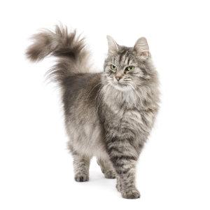 Votre chat perd ses poils ? nos conseils