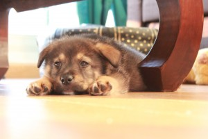 Rohan chien concours photo novembre 2015