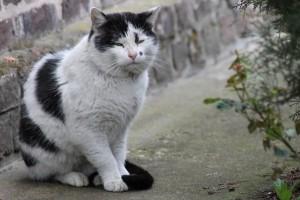 chat âgé, que faire face au vieillissement de mon chat