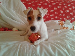 Gaya chien concours photo décembre 2015