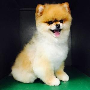 Gucci chien concours photo décembre 2015