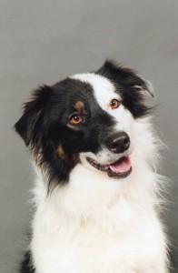 Harya chien concours photo décembre 2015