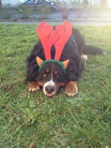 Izac chien concours photo décembre 2015