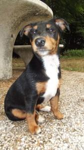 Leynon chien concours photo décembre 2015