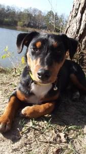 Leynon 2 chien concours photo decembre 2015