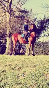 Senaca 1 cheval concours photo décembre 2015