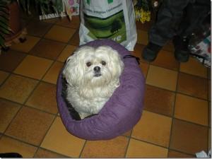 Tara chien concours photo décembre 2015