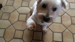 Vicky chien concours photo décembre 2015