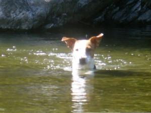 Bilout chien concours photo janvier 2016