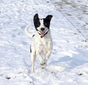 Bouly chien concours photo décembre 2016