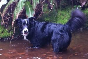 Happy chien concours photo janvier 2016
