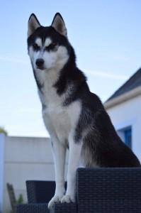 jaska chien concours photo janvier 2016