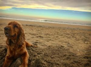 Jazzy chien concours photo janvier 2016