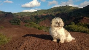 Sun chien concours photo janvier 2016
