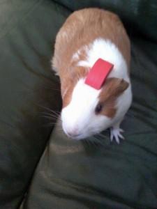 Tift hamster concours photo janvier 2016