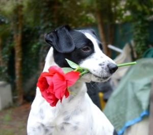 Bouly chien concours photo février 2016
