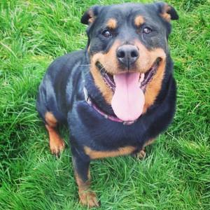 Falka chien concours photo février 2016