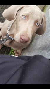 Hunt chien concours photo février 2016