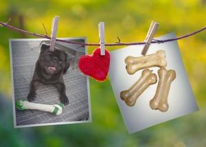 Ity chien concours photo février 2016
