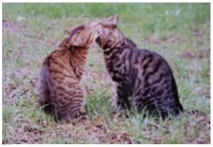 Kya et Cruesly chat concours photo février 2016