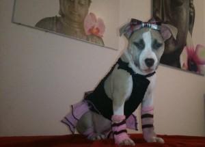Loouna chien concours photo février 2016