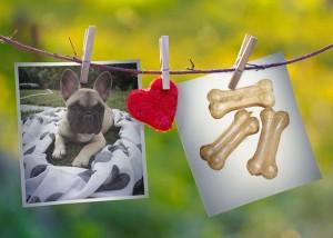Lucyolle chien concours photo février 2016