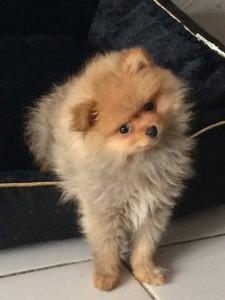 Lyna chien concours photo février 2016