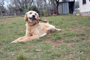 Max chien concours photo février 2016