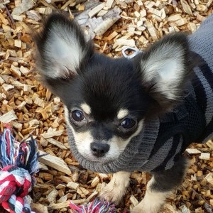 Moogli chien concours photo février 2016