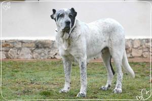 Pastora chien concours photo février 2016