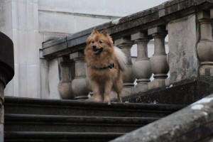 Rox chien concours photo février 2016