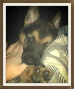 Zara chien concours photo février 2016