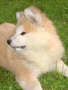 Caline chien concours photo mars 2016