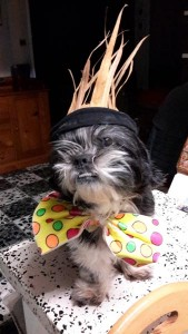 Dana chien concours photo mars 2016
