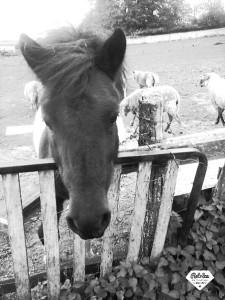 Ioko cheval concours photo mars 2016