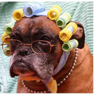 Laika chien concours photo mars 2016
