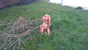 Lipton chien concours photo mars 2016