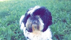 Ernest chien concours photo avril 2016