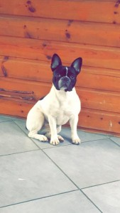 Jaïa chien concours photo avril 2016