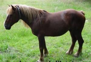 Nimbus cheval concours photo avril 2016