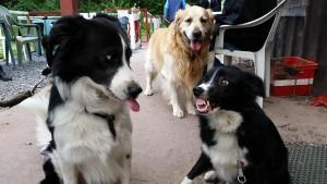 Tom et Laika chiens concours photo avril 2016