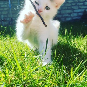 Chanel chaton concours photo animaux chatons chiots